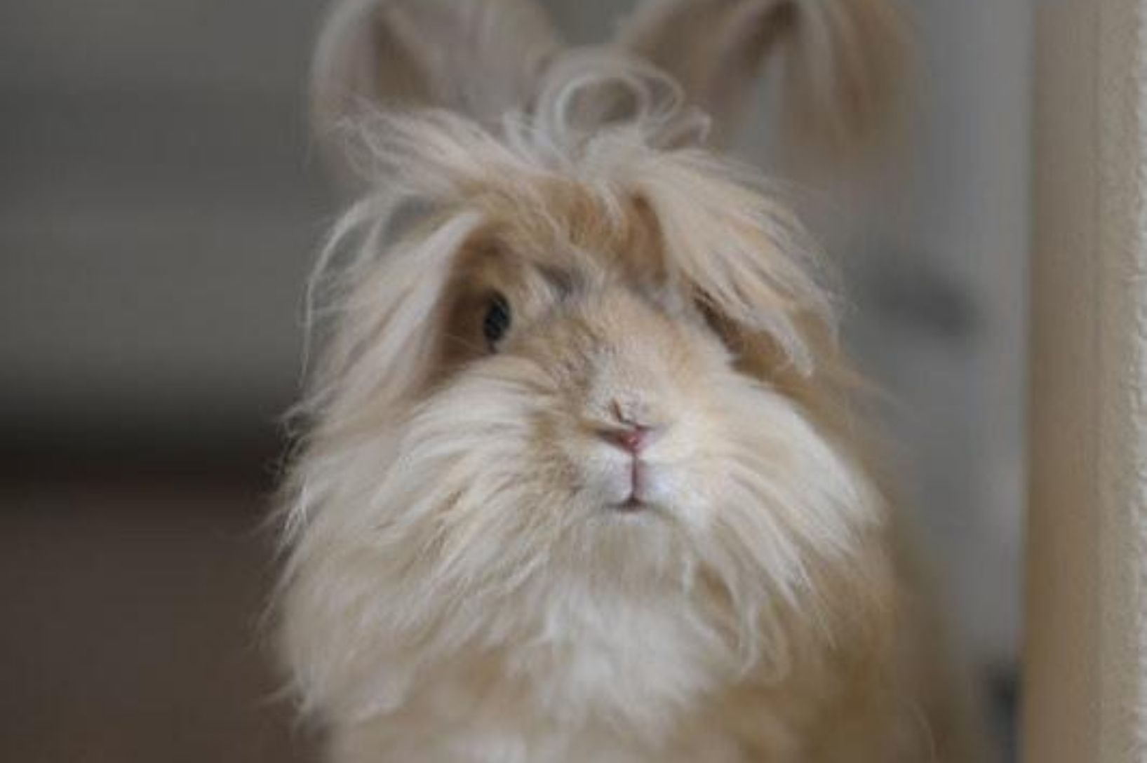 What is Angora?